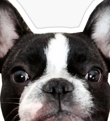 French bulldog, Vincent the frenchie Sticker