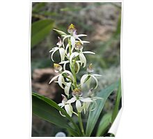 Small Orchids Poster