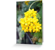 Starburst yellow flowers Greeting Card