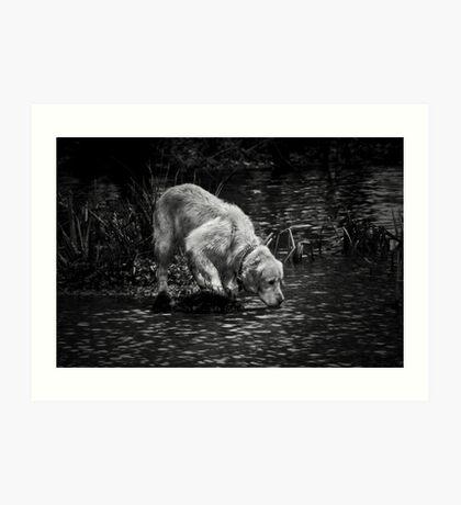Pet in pond Art Print