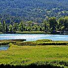 Green lake by dedakota