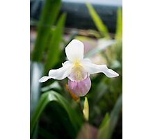 Beautiful Orchid Photographic Print