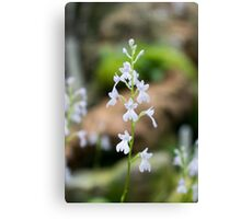 Snow white Flowers Canvas Print