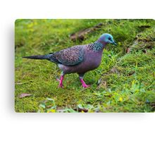 Spotted Dove - Pigeons and Doves Canvas Print