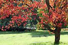 Blushing Tree by Astrid Ewing Photography
