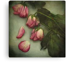 Tears of a Rose  Canvas Print
