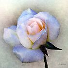 Roughsilk Rose by RC deWinter