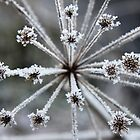 Crystallised by Zennia