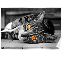 Orange eyed cat Poster