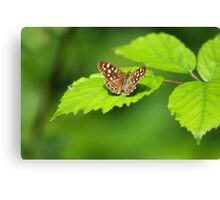 Speckled Wood Canvas Print