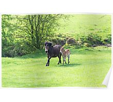 Mother & Foal. Poster