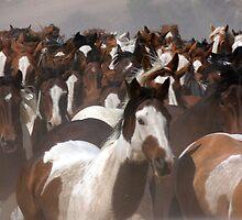 Horses On The Move by photosbydeniece