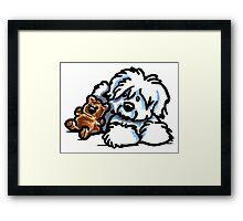 Coton Teddy Bear Framed Print