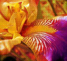 Magic Iris by Vitta