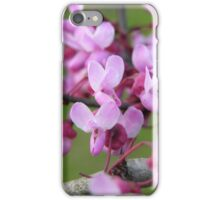 Redbud Blossoms iPhone Case/Skin