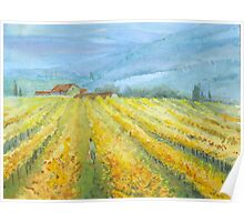 Vineyard, Tuscany by Mary Faux Jackson Poster