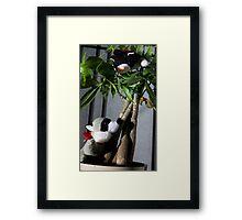 Raccoon and Cat Hide and Seek Framed Print