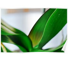 Orchid Leaves Poster