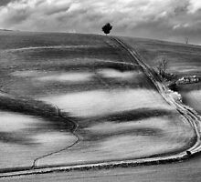 Tuscany by Barbara Andolfi