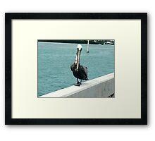 For the bird lover in you!!! Framed Print