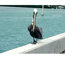 For the bird lover in you!!! Photographic Print