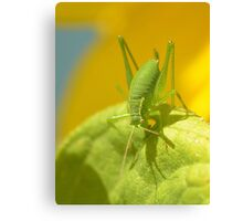 Speckled Grass Hopper  Canvas Print