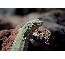 Tenerife lizard Photographic Print