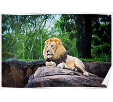 King of the Animal Kingdom Poster
