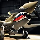 Tiger Shark Airplane WWII  by Jason Franklin
