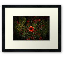 Orange Blossom Beauty Framed Print