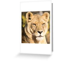 629 lioness Greeting Card