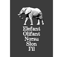 The World Of Elephants Photographic Print