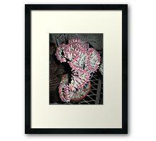 Coral Cactus Framed Print