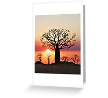 Boab Sunset along the Derby Marsh W.A. Greeting Card