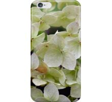 Natural background with small green leaves and flowers. iPhone Case/Skin
