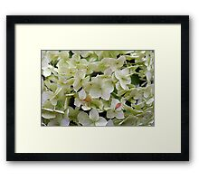 Natural background with small green leaves and flowers. Framed Print