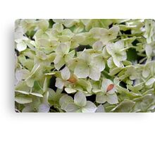 Natural background with small green leaves and flowers. Canvas Print