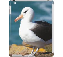 Black-browed Albatross - Saunders Island, the Falklands iPad Case/Skin
