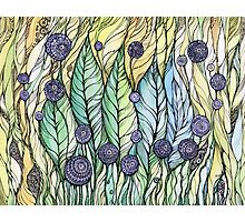 Dandelions.Hand draw  ink and pen, Watercolor, on textured paper Photographic Print