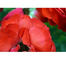 Macro on red roses petals. Photographic Print
