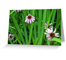 Pink large flowers in the grass. Greeting Card