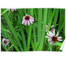 Pink large flowers in the grass. Poster