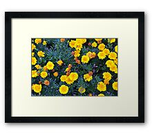 Beautiful yellow flowers texture. Framed Print