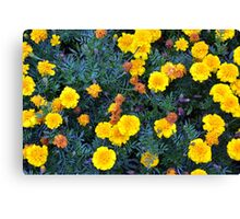 Beautiful yellow flowers texture. Canvas Print