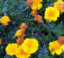 Beautiful yellow flowers texture. Sticker