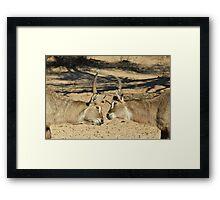 Waterbuck - African Wildlife Background - Fighting Eyes Framed Print
