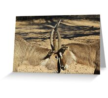 Waterbuck - African Wildlife Background - Locking Horns Greeting Card