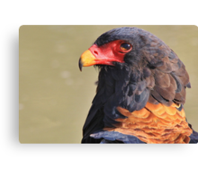 Bateleur Eagle - African Wildlife - Colorful Power Canvas Print