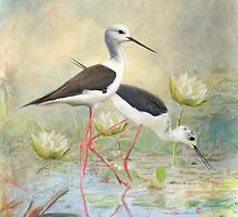 Black Winged Stilt by Trudi's Images