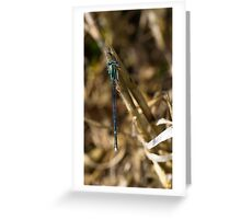 3 - Libellula Greeting Card